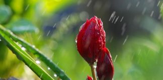 Жълт код за валежи и градушки