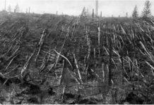 Метеорит не е удрял Земята при река Тунгуска