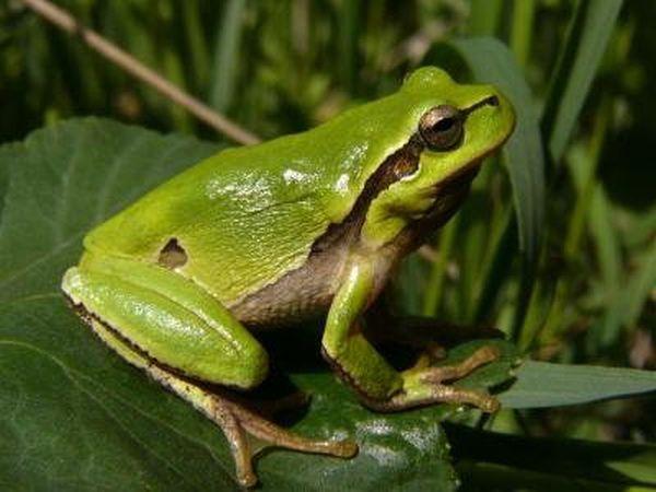Иванчо имал жаба в джоба си