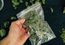 Две бързи производства за марихуана