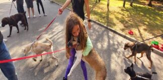 Акция за осиновяване на безстопанствени кучета
