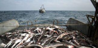 Изчезват рибните запаси в Черно море