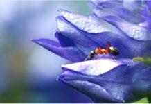 Мравките - соществата, за които почти нищо не знаем