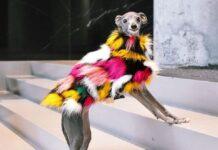 Тика е моден инфлуенсър