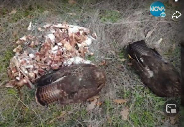 Смъртоносни примамки убиват животни край Черноморец