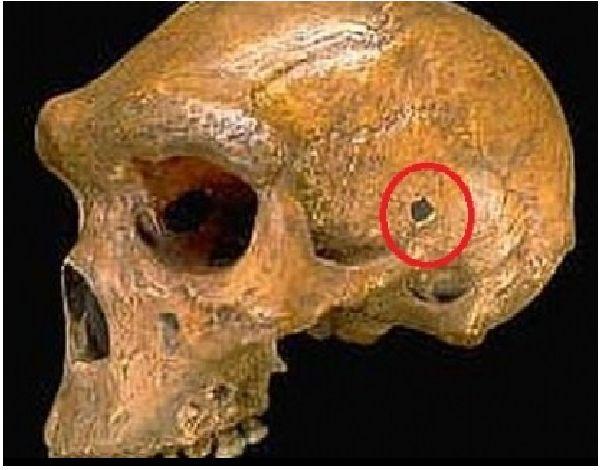 Неандерталец отнесъл куршум в черепа?